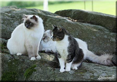 Ellen, Tova och Tessie, augusti 2012