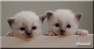 Bino och Benjamin är också lite nyfikna...