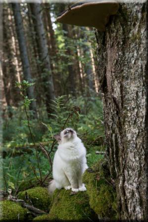 Disa i skogen Foto: Madeleine Lunde Tylenda