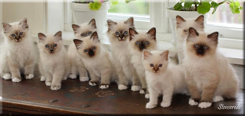 Fanny, Galia, Gamina, Gulli, Figaro, Fideli, Grynet, Frans och Freddie
