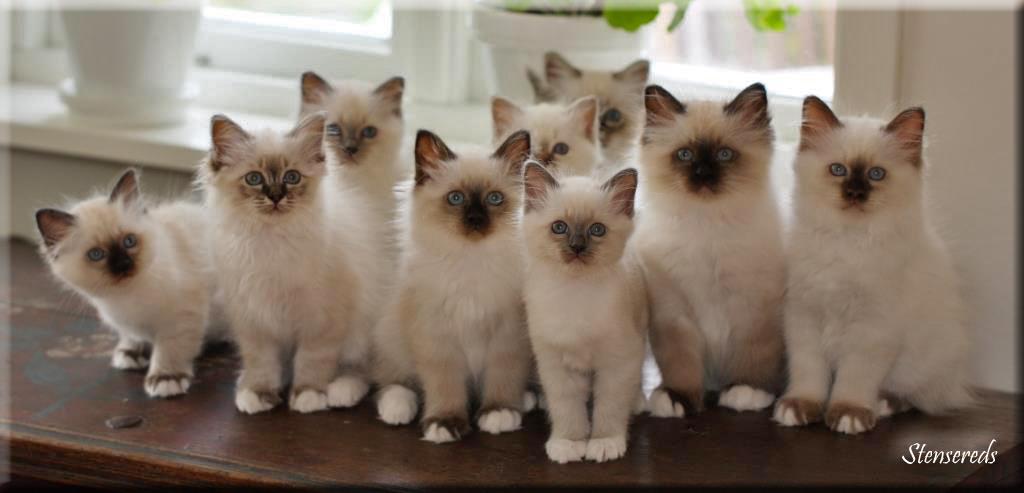 Gulli, Fanny, Galia, Fideli, Grynet, Figaro, Gamina, Freddie och Frans