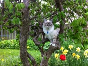 SE*Stensereds Dexter, 6 månader. Härligt att få klättra i träd!
