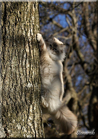 Embla älskar att rusa upp i träd!