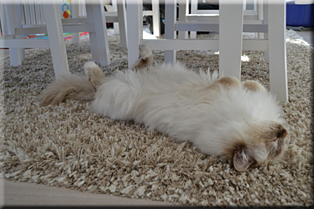 Castor är väldigt trött... Och trygg!