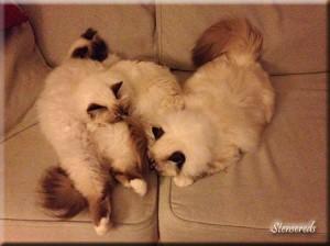 Ellen, Tova och Embla sover gott!