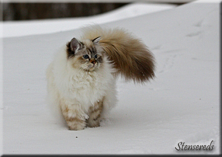 Embla njuter i snön!