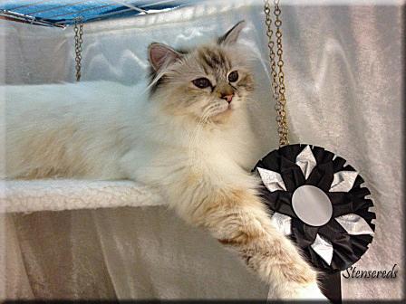 Embla  - stolt över sin nominering :-)