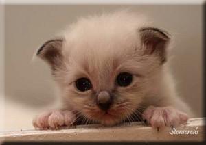 Figaro - yippee!