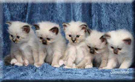 Figaro, Fideli, Fanny, Freddie och Frans