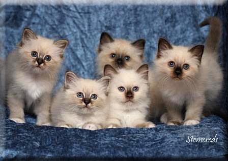 7 veckor: Fanny, Figaro, Frans, Freddie (bakom) och Fideli