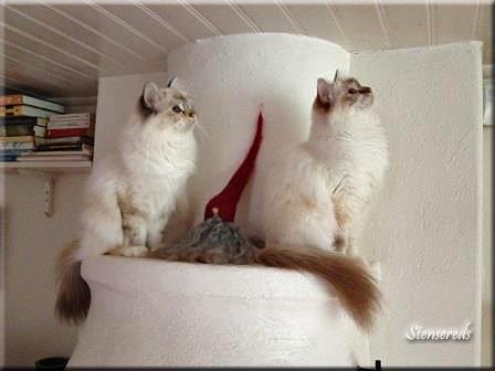 Embla och Tova lyssnar efter ljudet av små fötter - mössen kommer in när det blir kallt...