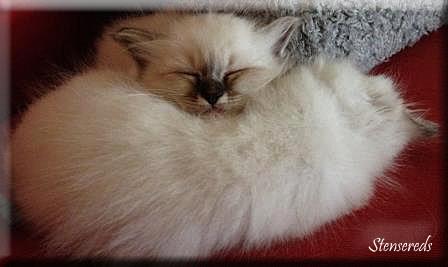 Figaro har Frans som huvudkudde