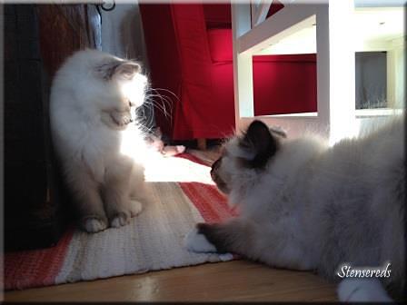 Lek med mig! Freddie utmanar Galia.
