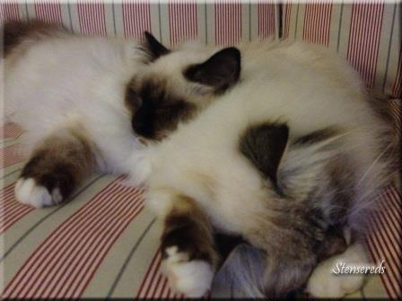 Gulli och Embla sover nära