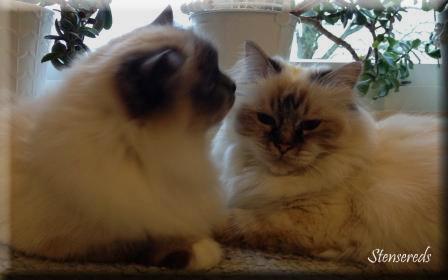 De tycker så mycket om varandra