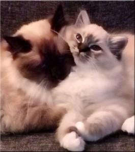 Zoe och Bailey - nära varandra Foto: Linda Juhlin