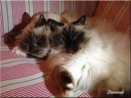 Ellen och Gulli i soffan