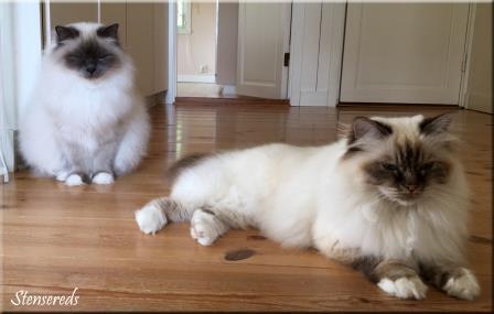 Våra drottningar: Ellen och Tova