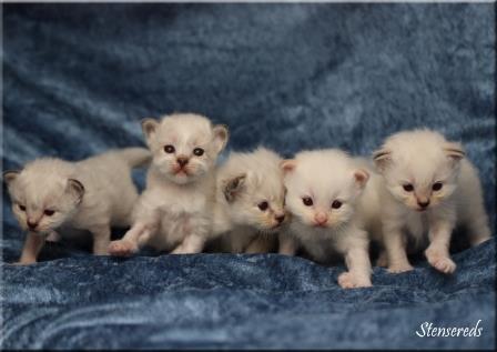 3 veckor: Junis, Jenna, Jamina, Julius och Jessi