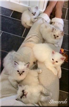 Framifrån: Jenna, Junis, Julius, Jamina och Jessi