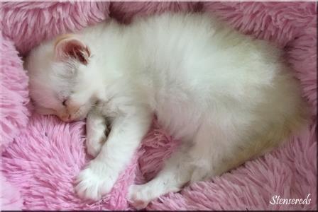 Julius älskar att sova i den rosa puffen!