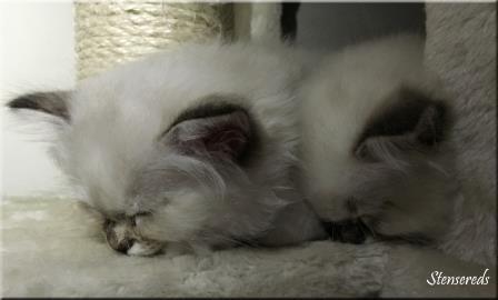 Jamina och Jenna har somnat där det är lite trångt...