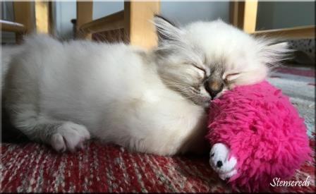 Junis har somnat med en leksak som huvudkudde