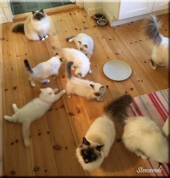 Det kryllar av katter vid matdags!