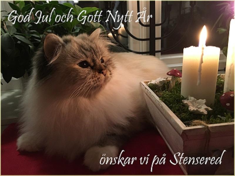 God Jul önskar Embla och alla vi andra!