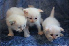 3 veckor - Nellie, Nelson och Nisse