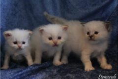 4 veckor - Nisse, Nelson och Nellie