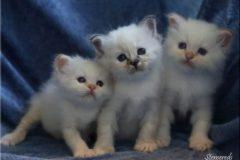 5 veckor - Nisse, Nellie och Nelson